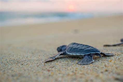 baby sea turtle release puerto escondido mexico