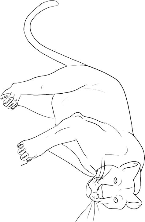 panther coloring color page sheet  printable