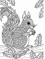 Squirrel Coloring Adult Zentangle Colouring Adults Animals Sheets Flying Woodland Coloringbay Craft sketch template