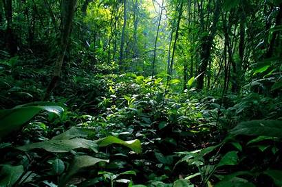 Rainforest Forest Backgrounds Rain Background Biodiversity India