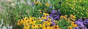 Graines Fleurs Des Champs : 6 gestes simples pour aider les abeilles page 2 of 3 page 2 ~ Melissatoandfro.com Idées de Décoration