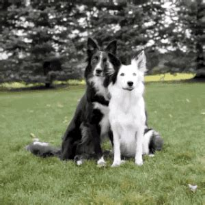 dog hug gifs find share  giphy