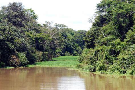 jurua purus moist forests wikipedia