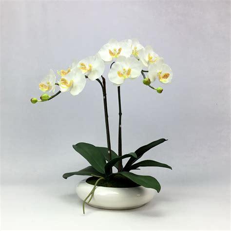 ดอกกล้วยไม้ประดิษฐ์ phalaenopsis orchid plant pot arrangement