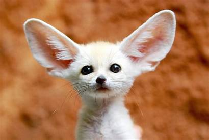 Animals Cutest Most Animal Amazing Wild Very