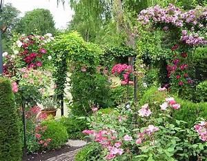 Rose Mein Schöner Garten : rambler rosen pflegeschnitt mein sch ner garten forum ~ Lizthompson.info Haus und Dekorationen
