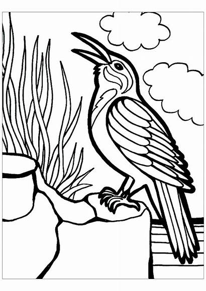 Birds Coloring Pages Children Animals Printable Justcolor