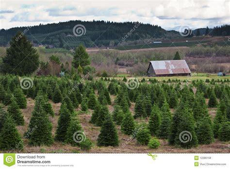 oregon christmas tree farm royalty free stock photos