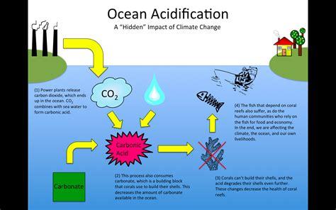 Ocean Acidification Effects Wwwimgkidcom The Image