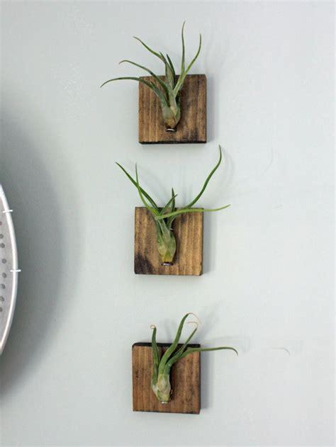 plantes suspendues fonctionnelles  decoratives
