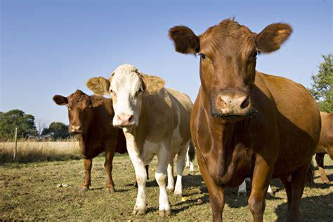 bill proposes   farm animal torture  usda labs