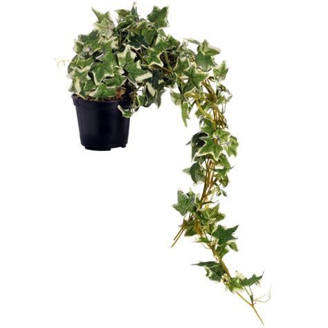 Indoor Plants Suitable For Dark Rooms  Interior Design