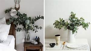 Eucalyptus Plante D Intérieur : l eucalyptus le feuillage qui change tout ~ Melissatoandfro.com Idées de Décoration