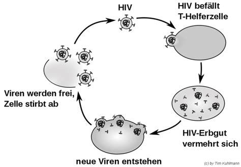 sexuell uebertragbare krankheiten biologie
