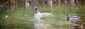 Late-season Duck Tactics
