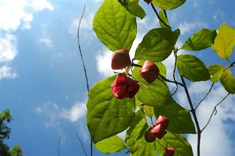 Botanischer Garten Frankenburg by Botanischer Garten Frankenburg 214 Sterreich