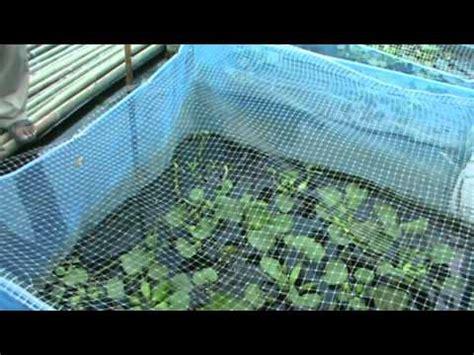 elevage grenouilles mpg