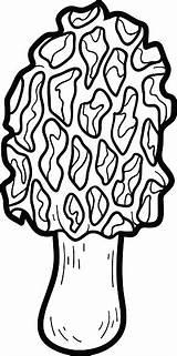 Coloring Mushrooms Morel Edible Vector Illustration Activity sketch template
