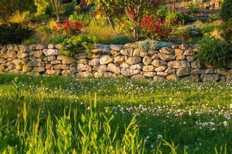 pflanzen für trockenmauer pflanzen f 252 r die trockenmauer 187 diese eignen sich am besten