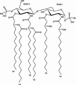 The Chemical Structure Of The Lipid A From Escherichia Coli Lps  The
