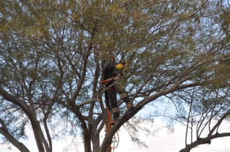 Blog  Tree Removal Las Vegas  Safety First At Nevada Tree. How Many Bank Accounts Should I Have. Medical Assistant Salary In Nc. Can You Own A Car Without Insurance. Emt Intermediate Classes Identity Theft Crime. Gateway College Kentucky Maryland Mba Ranking. Urethral Problems In Women Msn Program Online. Internet Meeting Services Banks In Wilmington. Silicone Allergy Symptoms Cable Systems Inc