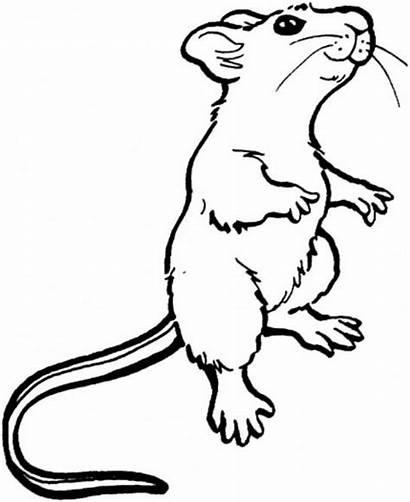 Mouse Drawing Clipart Rat Outline Maus Schwarz