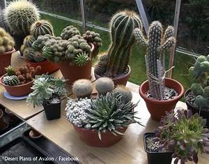 Pot A Cactus : how to re pot an established cactus and succulent bowl garden youtube ~ Farleysfitness.com Idées de Décoration
