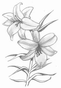 Drawings Flowers - Flowers Ideas For Review