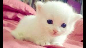 صوت قط�... Cute Animals