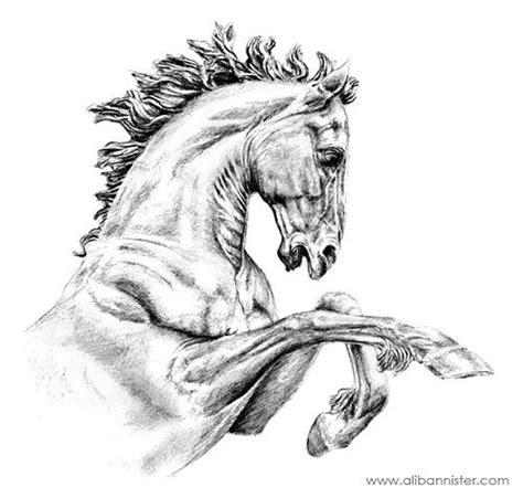 drawings images  pinterest drawings  horses