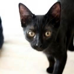 black cat rescue black cat rescue blackcatrescue