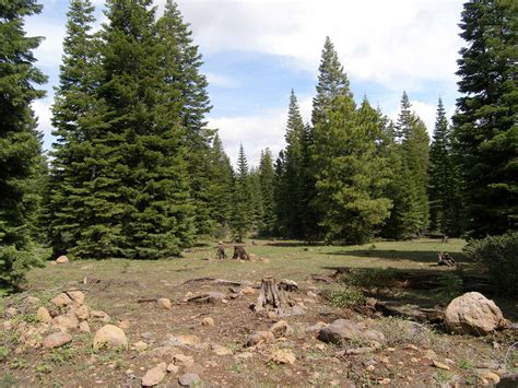 160 acres Forest land for sale