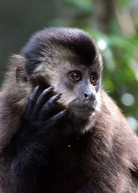 monkeys images  pinterest monkeys wild