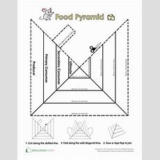 Trophic Level Pyramid  Coloring Pages, Life Science And Coloring Worksheets