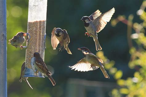 stop birds from hitting windows how to stop birds from hitting your windows feldco 8364