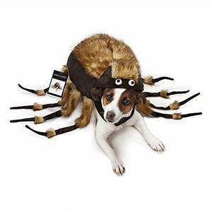 dog spider costume