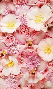 Pink Flower Phone Backgrounds | 2021 Cute Wallpapers