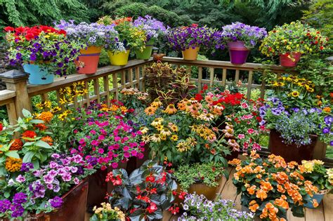 ideas for flowering container gardens