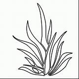 Coloring Plants Pages Plant Drawing Seaweed Underwater Sea Grass Ocean Shrubs Aquatic Outlines Colouring Draw Clipart Printable Kelp Getdrawings Seagrass sketch template