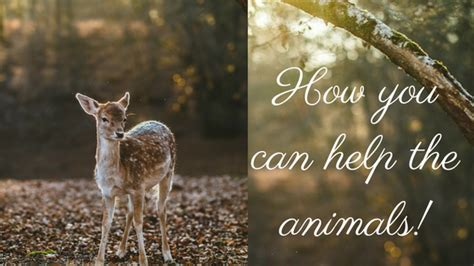 how animals help top 28 how animals help 50 ways kids can help animals how animals help humans their