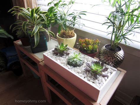 diy succulent box homey oh my with indoor succulents