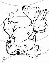 Goldfish Coloring Printable Gambar Ikan Fishes Animals Koki Mas sketch template