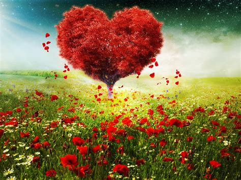 wallpaper love heart tree sunlight poppy flowers