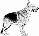 Coloring Dog Shepherd German Dogs Realistic Breed Drawings Dane Puppy Breeds Colouring Printable Para Mandalas Colorear Coloringhome sketch template