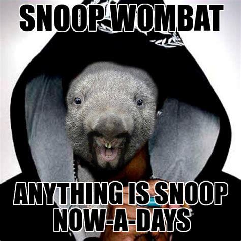 Wombat Memes - wombat memes 28 images wombat weknowmemes generator wombat memes 100 images 25 best memes