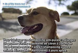 Puce De Chien : un rem de anti puces naturel pour chiens ~ Melissatoandfro.com Idées de Décoration