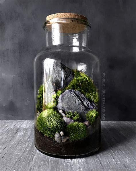 moss in glass jar woodland moss and fern terrarium in large glass jar