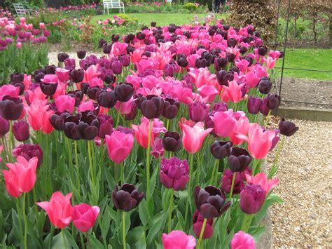 perennial flower garden design ideas post florist columbia