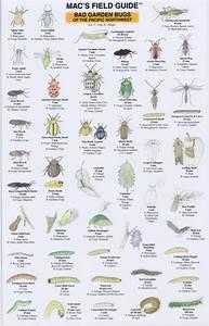 Mac Field Guide Of Garden Bugs