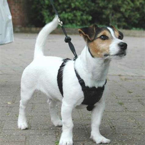 dog harnesses sale  uk delivery petplanetcouk